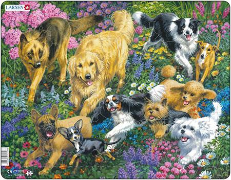 hunde-im-blumenfeld
