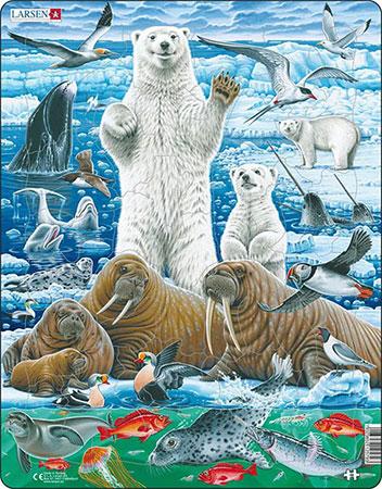 nordpol-eisbar-und-walross