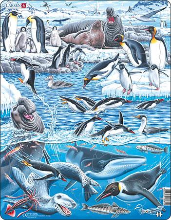 Kalte und wunderschöne Antarktis