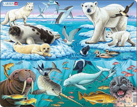 Tiere Arktis