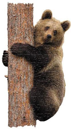 Bären Junges