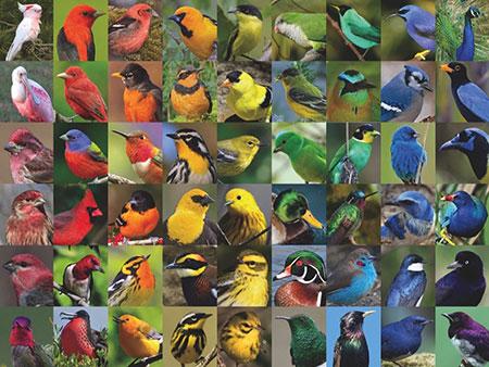 regenbogen-der-vogel