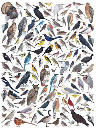 westamerikanische-vogel