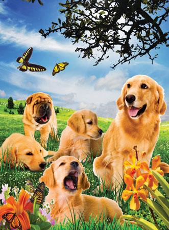 Hunde auf der Wiese 3D Effekt