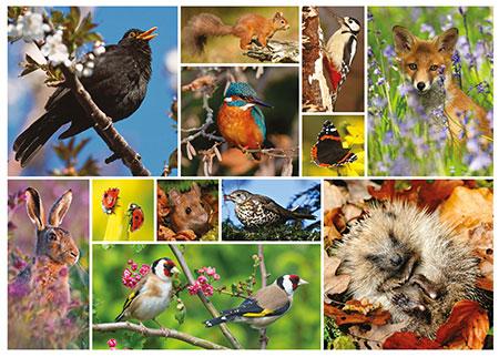 tierbilder-collage