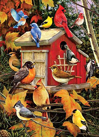Bunte Vögel am Unterschlupf