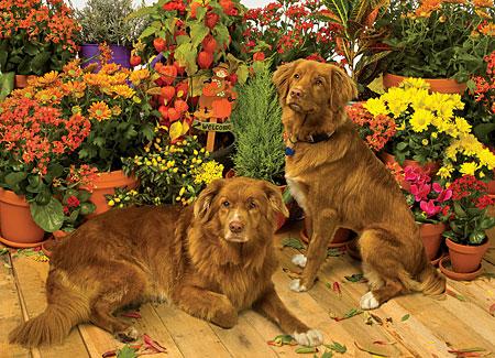hunde-vor-den-topfpflanzen