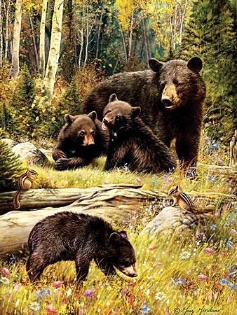 Mit der Bärenfamilie auf der Reise