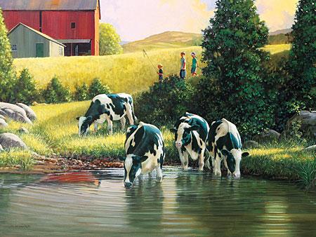 Kühe an der Wasserstelle