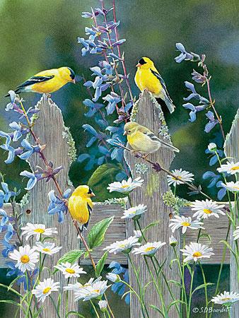 Kleine Goldfinken auf dem Gartenzaun