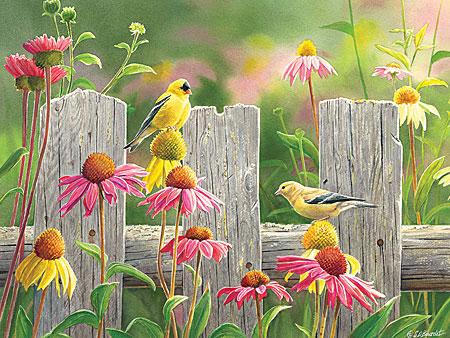 Gelbe Vögel vor dem Gartenzaun