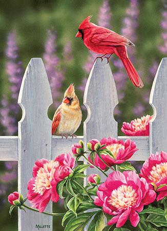 kardinale-und-pfingstrosen