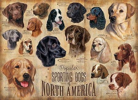 populare-hunde-nordamerikas
