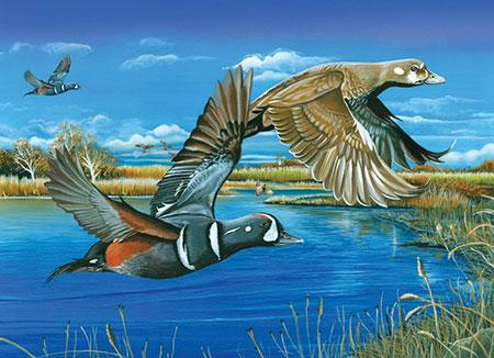 Vögel über dem Teich