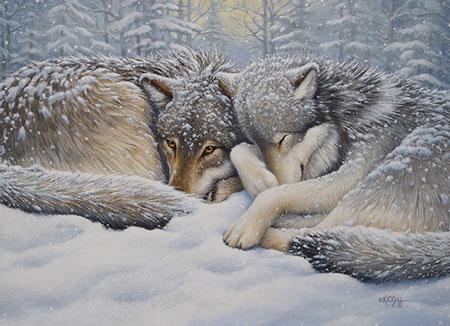 wolfe-bei-der-winterruhe