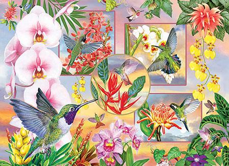 magie-der-kolibri