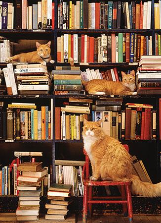 katzen-im-gotham-bookstore