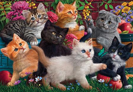 Spielende Katzenkinder