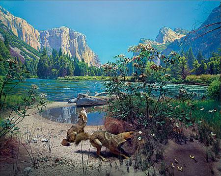kojoten-vor-dem-bergsee