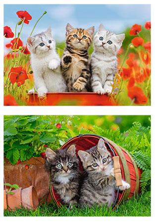Katzen auf Entdeckungsreise