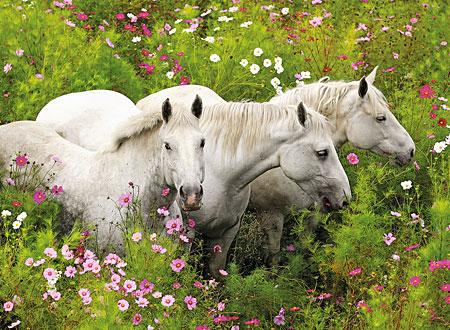 pferde-auf-der-blumenwiese
