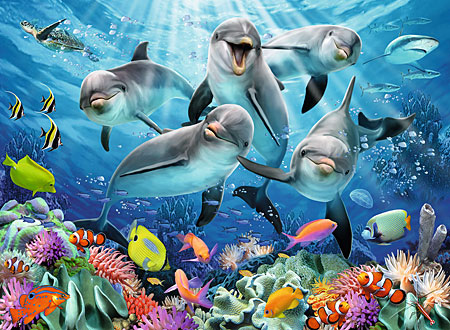 delfine-im-korallenriff