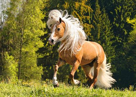 pferdegluck