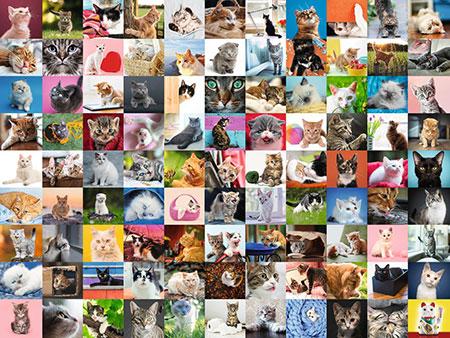 99 Katzen