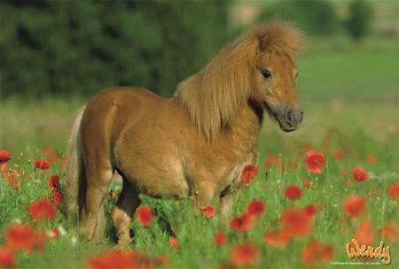 www pony spiele de