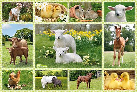 Tierkinder auf dem Bauernhof