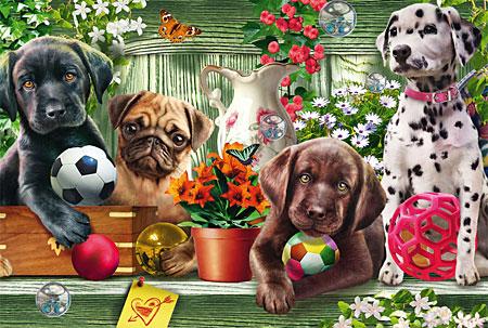 Verspielte Hundekinder