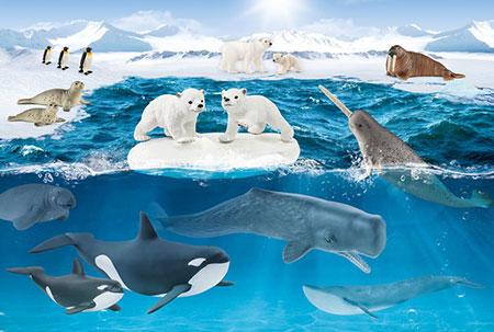 In der Arktis