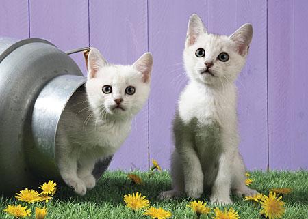 Katzenschwestern