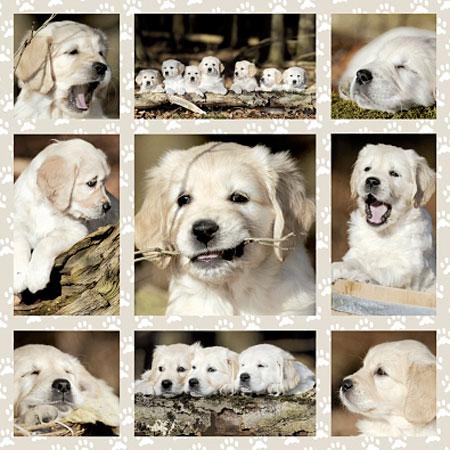 Hundekinder