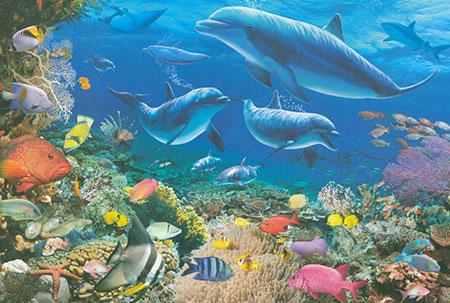 delphin-spielen-im-ozean