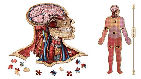 Dr. Livingstons: Anatomiepuzzle - Der menschliche Kopf (1 von 7)