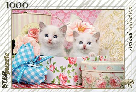 katzchen-in-der-geschenkdose