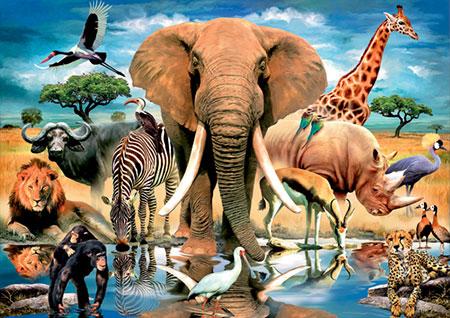 tiere-afrikas