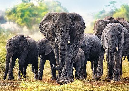 afrikanische-elefanten