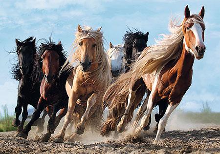die-gallopierenden-pferde