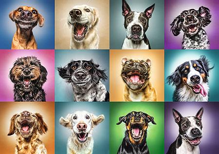 lustige-hundeportrats
