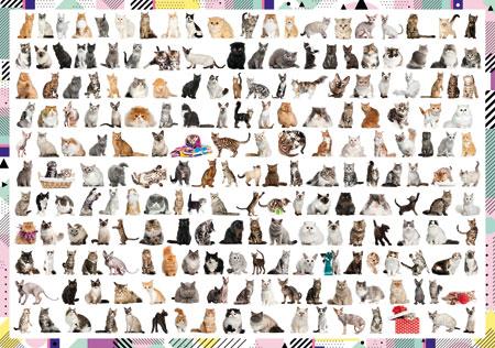 208 Katzen