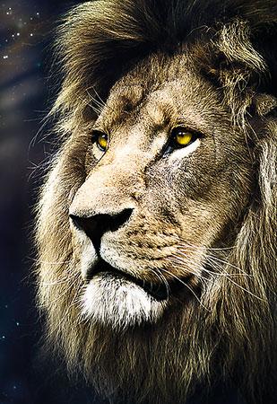 Das Portrait des Löwen