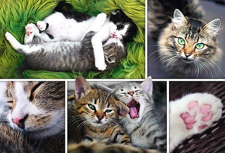 entspanntes-katzenleben-collage