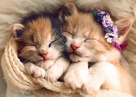 schlafende-katzen